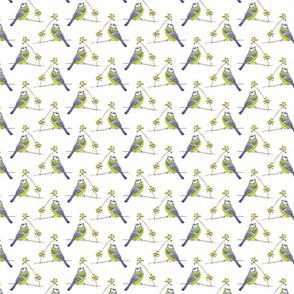 Blue Chickadee
