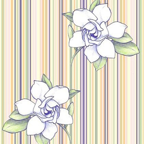 gardenia_stripe