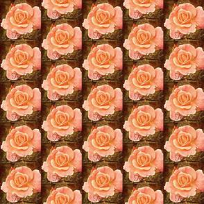 Vintage Tea Rose
