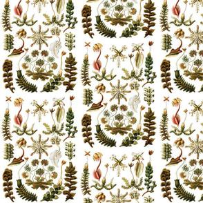liverworts white