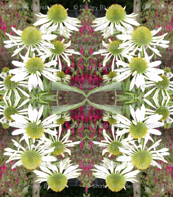 white flowers mirror image2