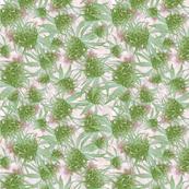 Cannabis Pink Bud