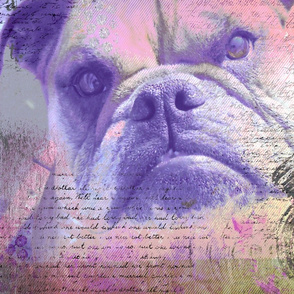 Dreamy Bulldog