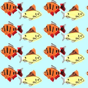 Yellow fish, orange fish