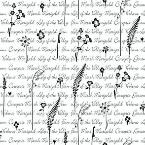 Garden Wall Script