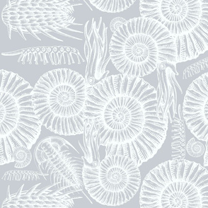 ammonite gray and white