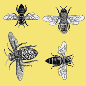 Honey Bees, Black and White Vintage Insects on Buttery Yellow
