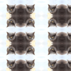 Russian Blue Cat Fabric