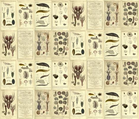 Cuvier animal plates