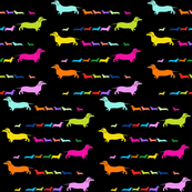 Short Haired Colorful Dachshunds