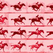 Muybridge Gallop (rose)