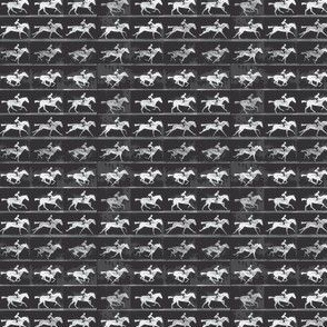 Muybridge Gallop (charcoal)