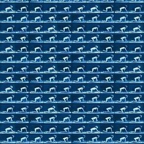 Muybridge Crawl (indigo)
