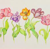 Tulips, Five Lush Tulips