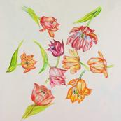 Strewn Tulips