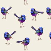 Royal Purple Wren