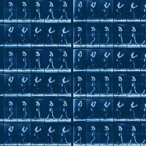 Muybridge Rake (indigo)