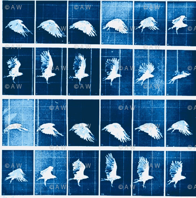 Muybridge Flap (indigo)