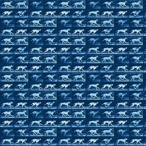 Muybridge Fetch (indigo)