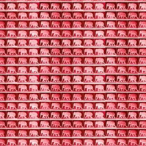 Muybridge Tromp (cinnebar)