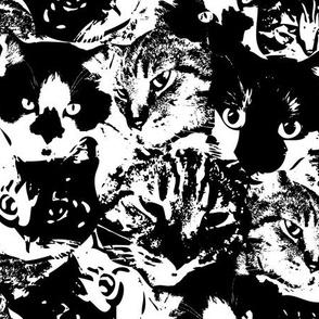 cat-camo