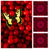 Cherry Butterfly & Burst