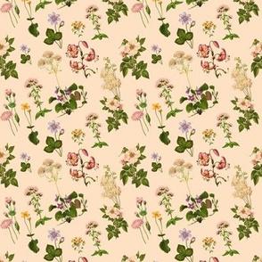 Small botanical print, Cinderella's Garden