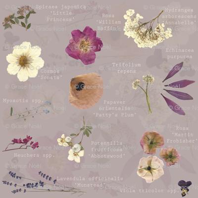 Aspiring Botanist