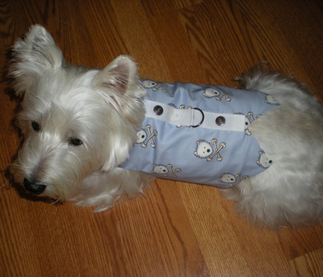 Small Playful Torrid Westies Blue
