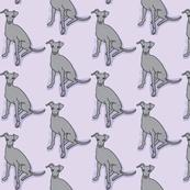 Gray iggy