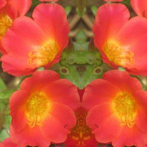 Cuban_Flowers