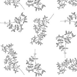 Pencil Plants