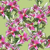 Rrrrrpink_lily_field_shop_thumb