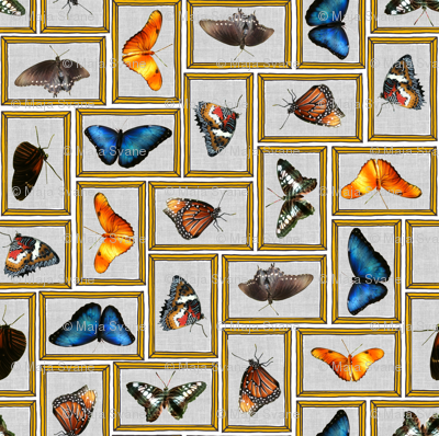 Miss E's butterfly collection