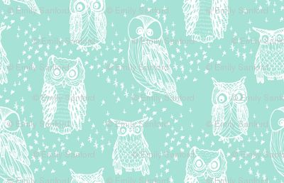 Little Owl in Aqua