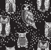 Little Owl in Black