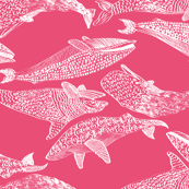 Whales in Pink