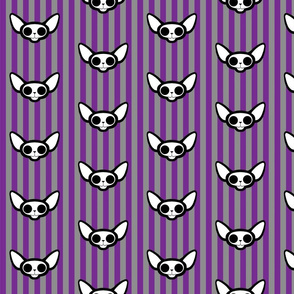 Sphynxie Bonez Sphynx Cat Skulls with Purple and Grey Stripes