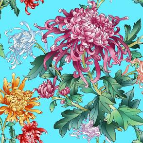 chrysantemum_celestial