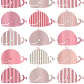 Baleine à rayures