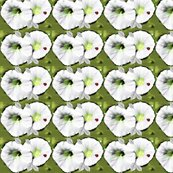 Petunias_ed_ed_shop_thumb