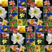 Rrlily_collage_shop_thumb