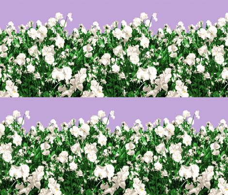 Viola Fields II.