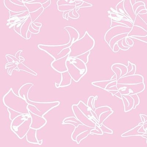 Pinkish Lillywhite