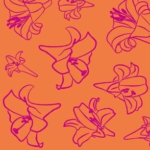 Pink Lillyorange