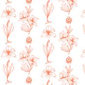 Lilium - Celosia Orange
