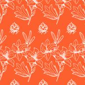 Lily Stripe - Celosia Orange