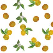 Oranges in circle