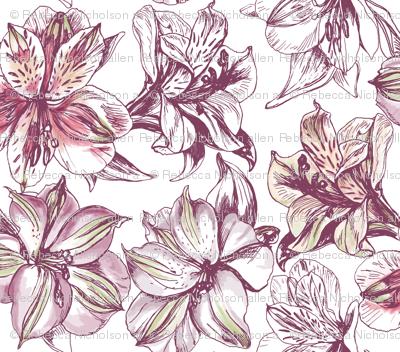 Peruvian Lilies