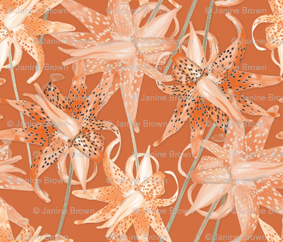 Tiger_Lilies